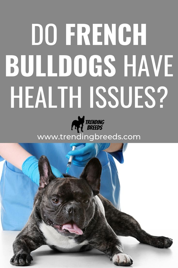 Do french bulldogs have health issues and limitations