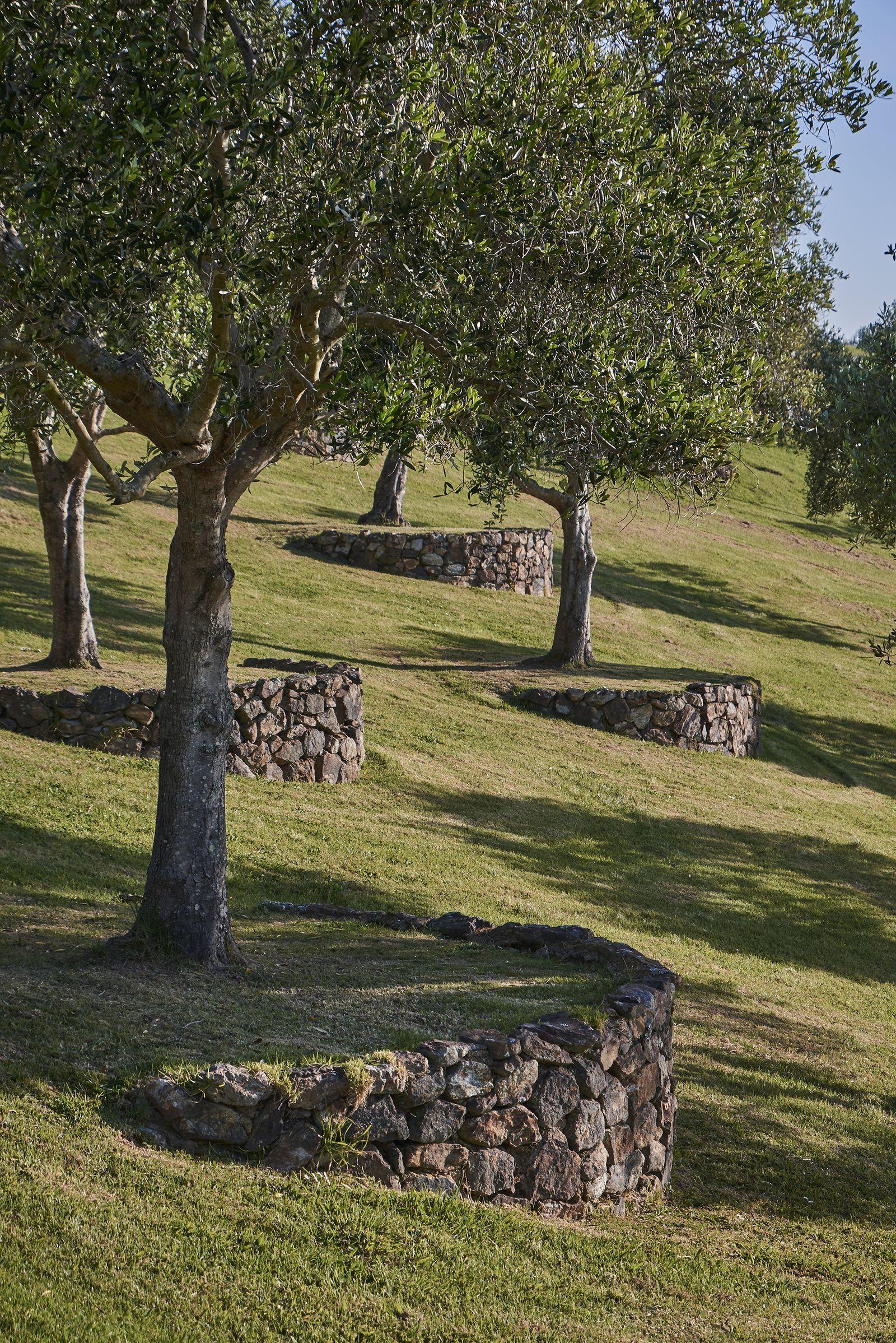 Matiatia Suzanne Turley Landscapes Backyard Landscaping Designs Sloped Garden Landscape Design