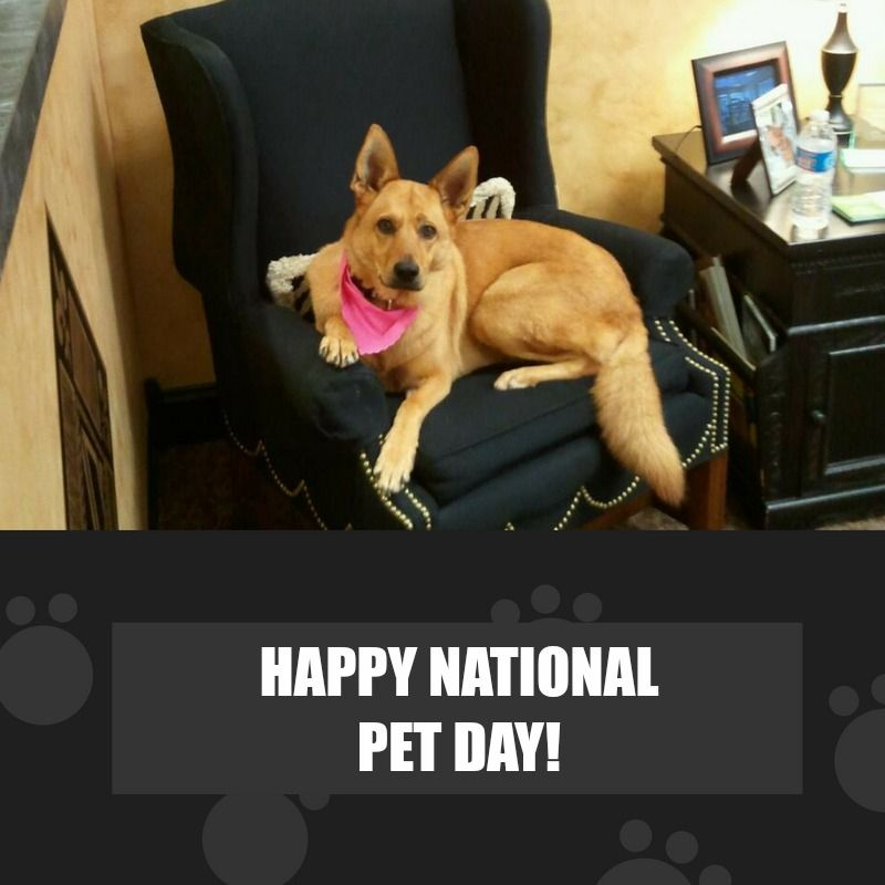 Happy Pet Day! Our store pup Ginger is keeper of the