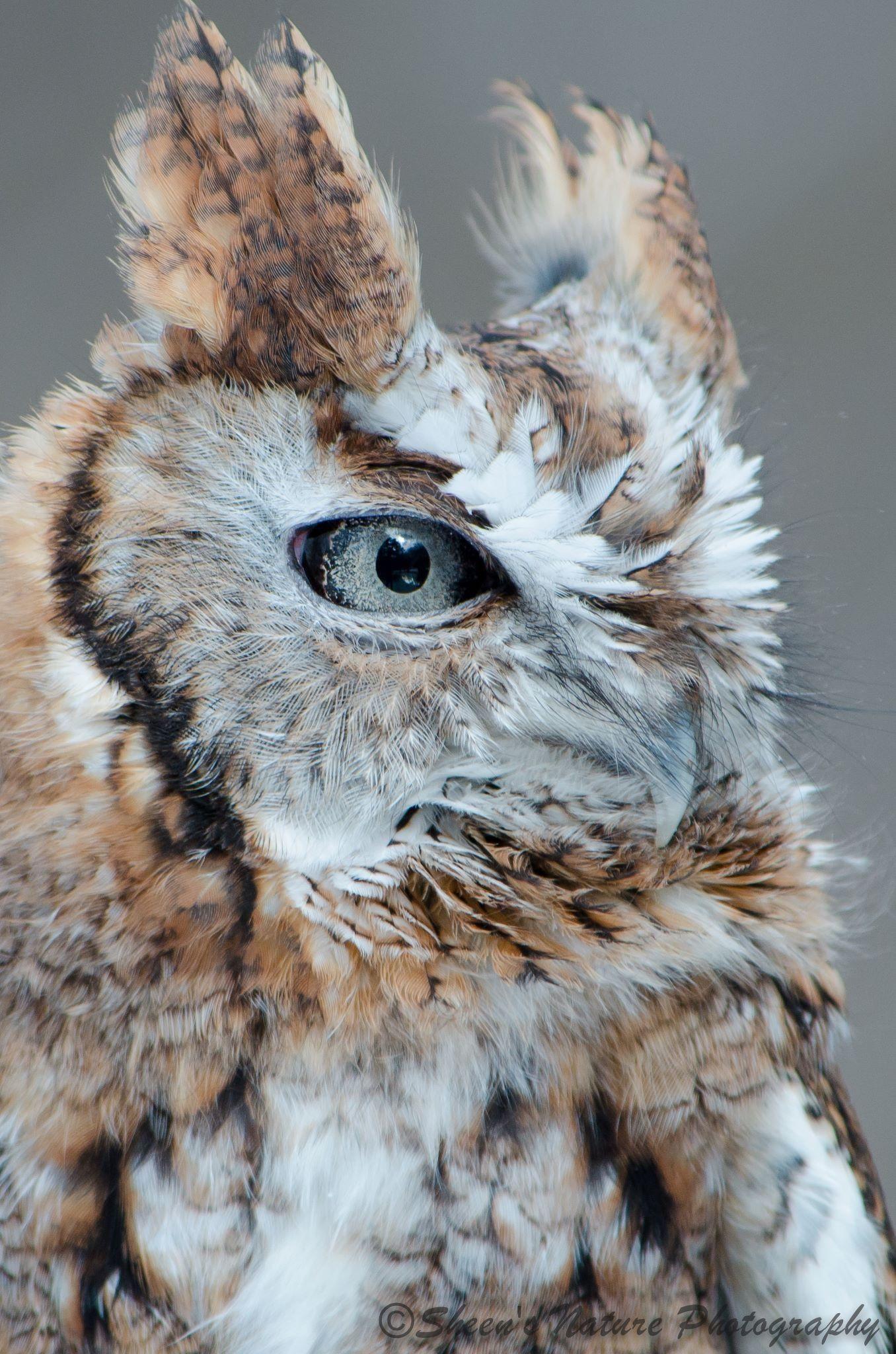 Pin by Nancy Muñoz on Birds Majestic animals, Owl images