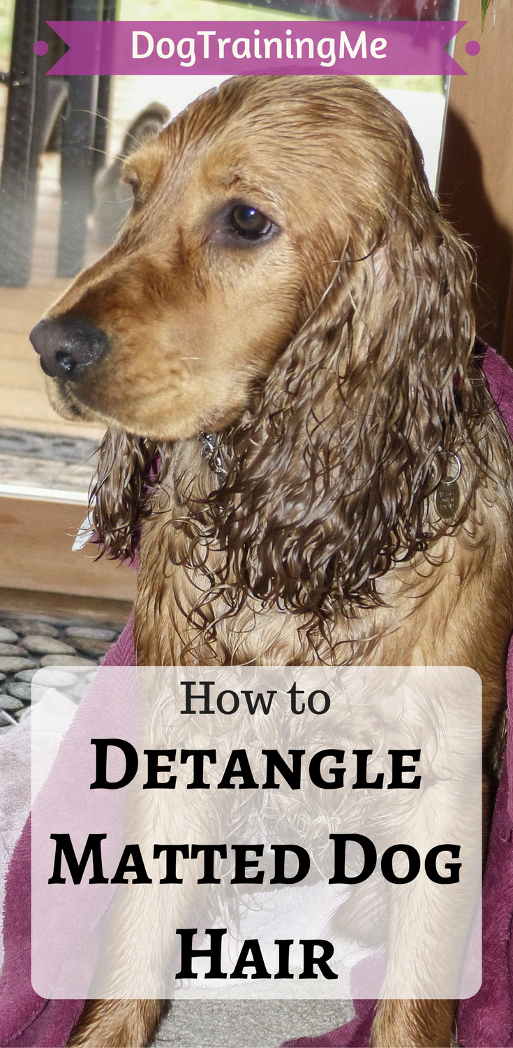 How To Detangle Matted Dog Hair We Show You Some Of The Best Equipment To Use And How To Get Rid Of Your Dog S Mats Matted Dog Hair Dog Hair Dog