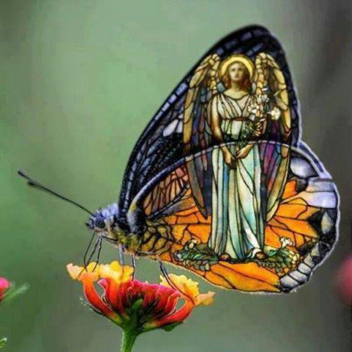 Guardian angel butterfly