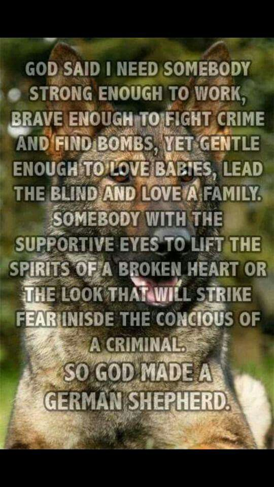 Pin by Kristina Wilhelm on Police/K9 German shepherd