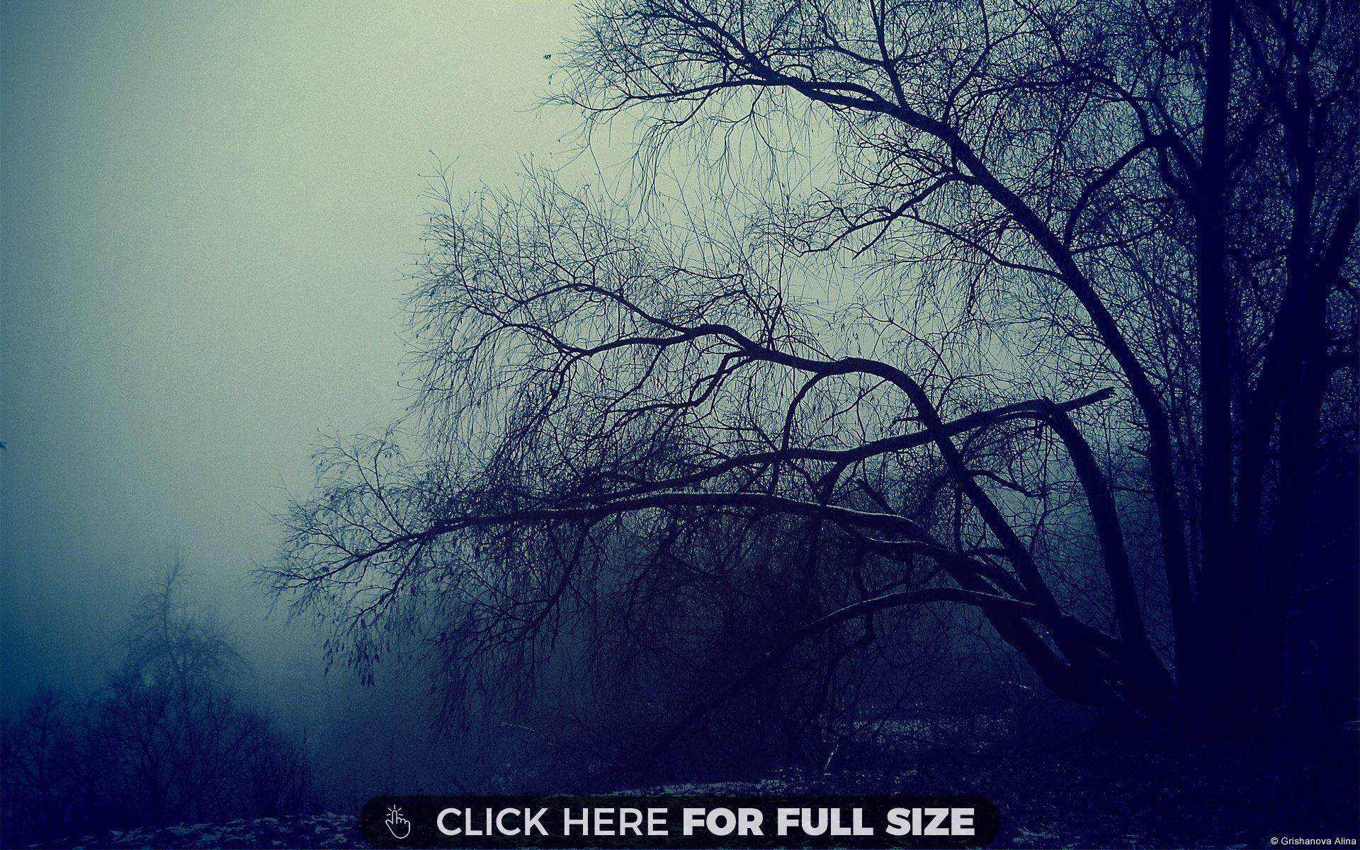 Heavy Fog 4k wallpaper for mobile, Wallpaper, Scenery