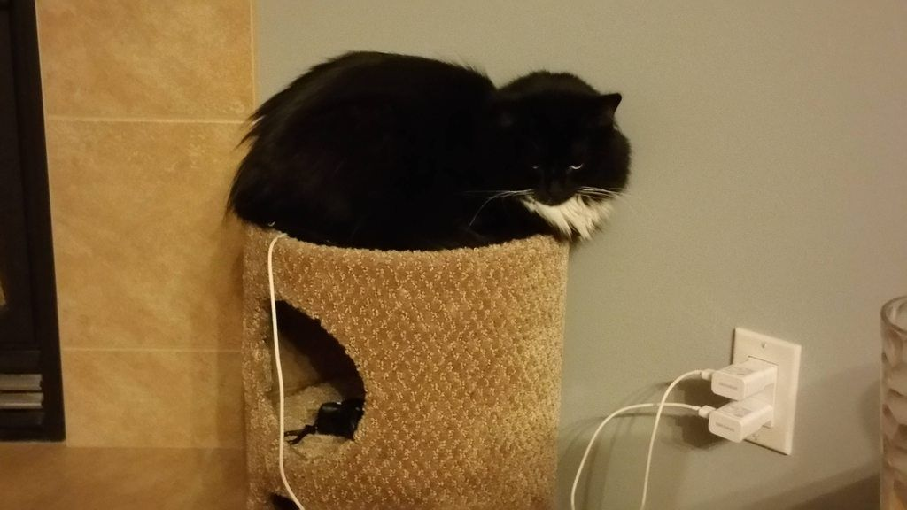 She sits here every day for 1 hour and recharges.