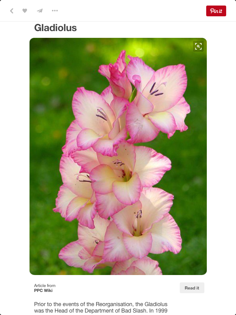 Gladiolus August birth flower Gladiolus flower