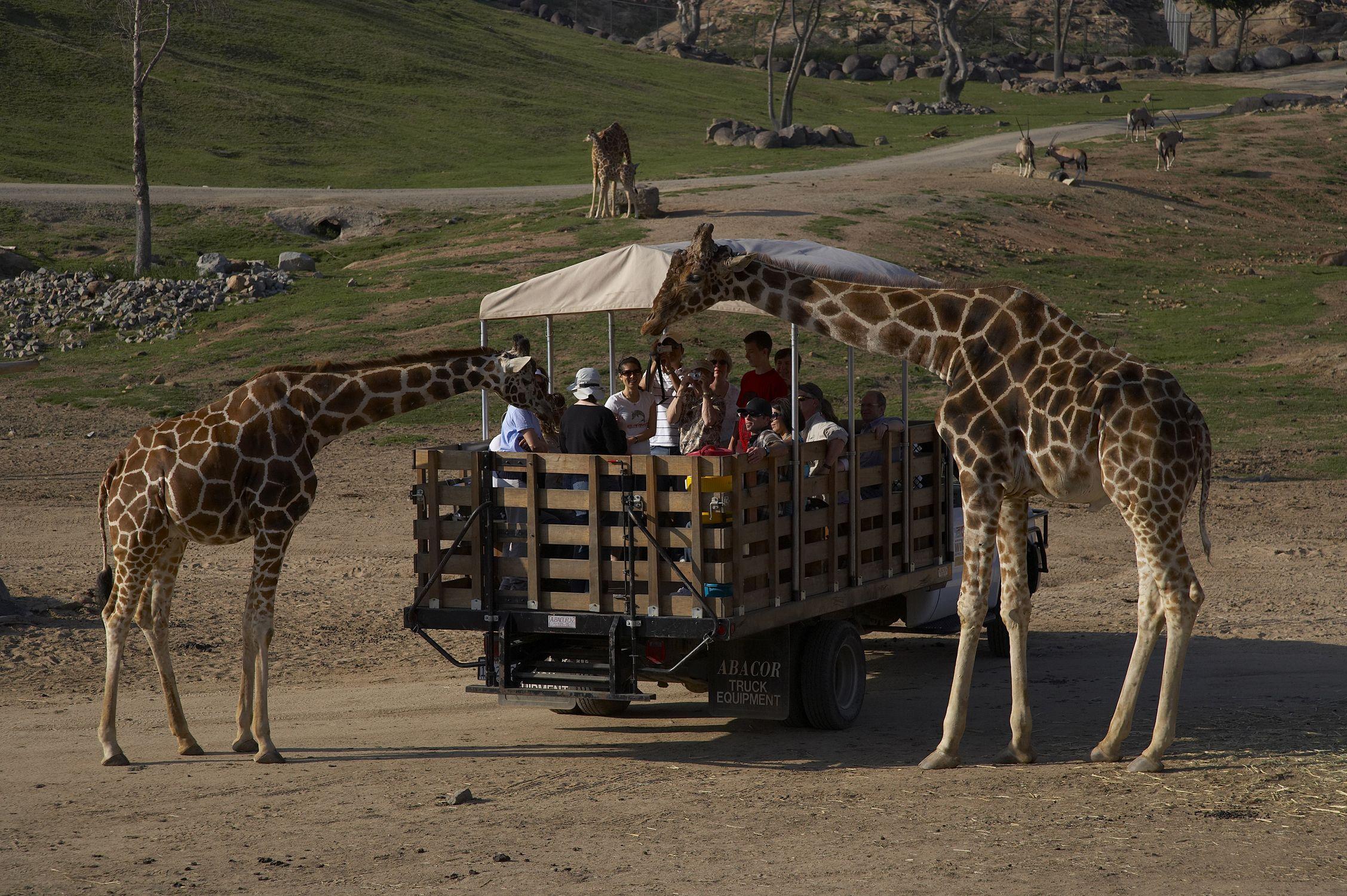 San Diego Zoo Safari Park Escondido Ca Http Sdzsafaripark18