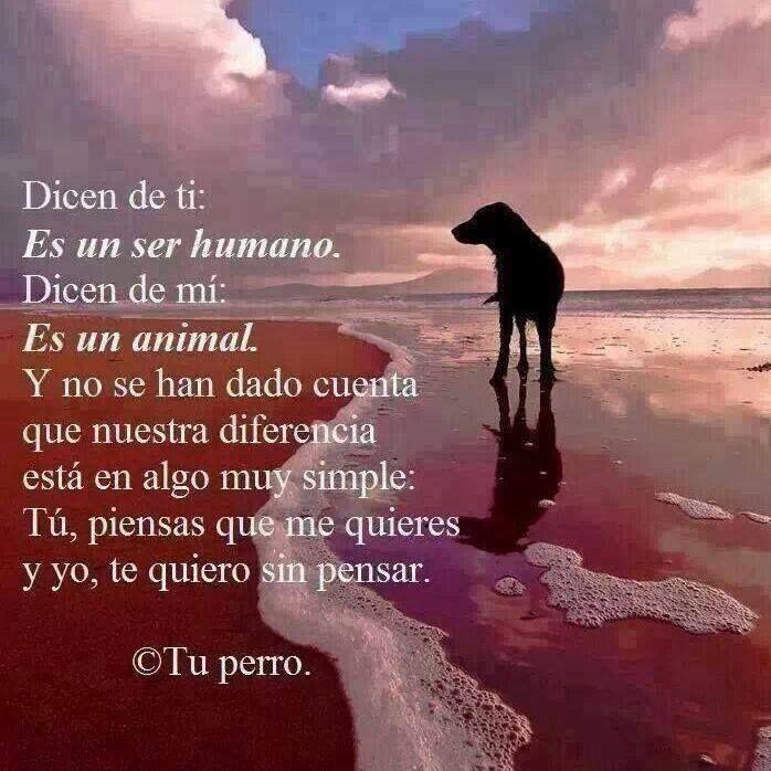 El Club De Los Poetas Muertos Perros Frases Love My Dog Animales Frases