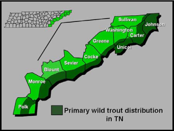 Trout Fishing In Tennessee Map.Tennessee Wild Trout Distribution Map Bleujaii On The Fly Trout