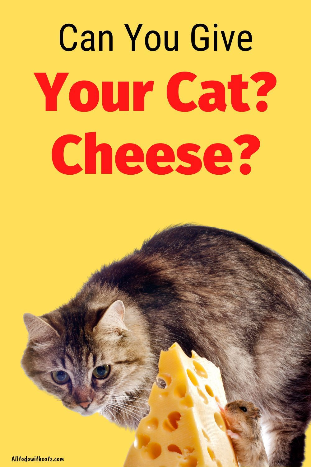 Can Cats Have Cheese In Their Diet What You Need To Know Cat Nutrition Cat Diet Plan Cat Diet