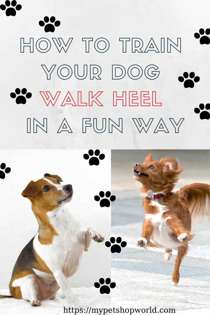 Make Your Dog Walk Heel Dog Training In 2020 Dog Training Best Dog Training Training Your Dog