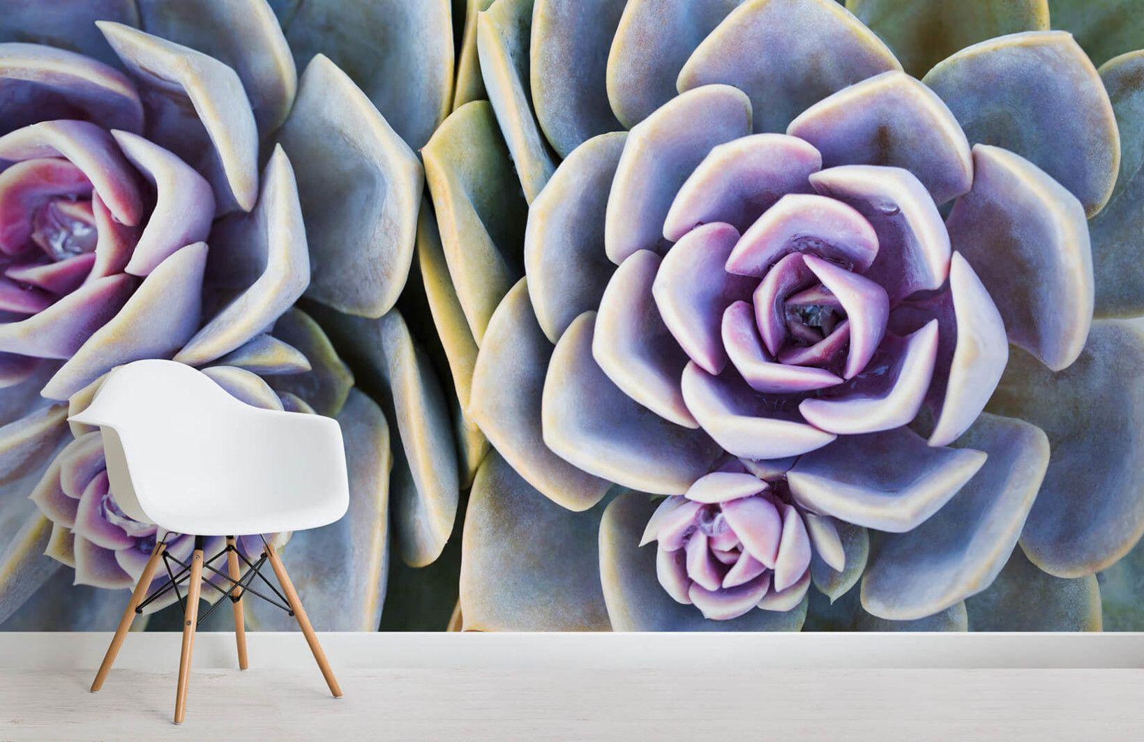 Succulent Plant Wallpaper Mural Plant wallpaper
