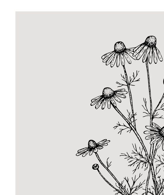 Chamomile print - Herbs art print - Kitchen decor - Herbs and plants - Kitchen printable - Grey mono -   12 plants Drawing tumblr ideas