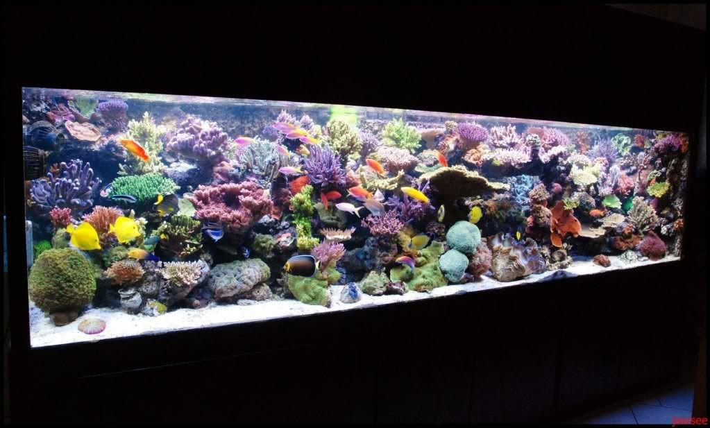 Los Mejores Acuarios Marinos Del Mundo Saltwater Aquarium Aquarium Design Reef Tank