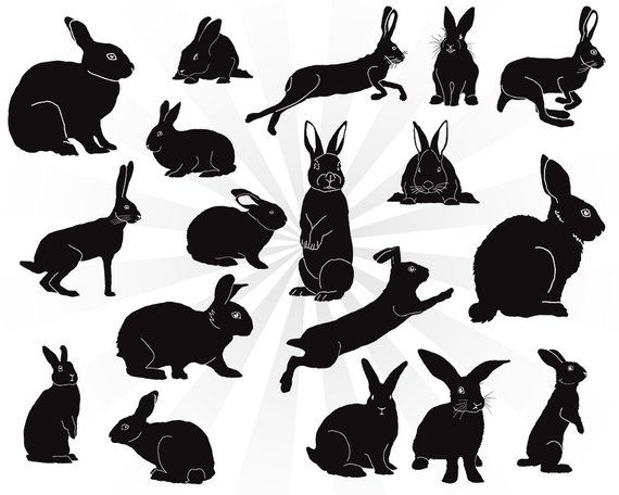 Rabbit Silhouette Svg Bundle Bunny Svg Bunny Rabbit Svg Svg