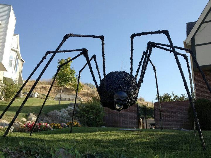 Best Halloween decoration ever even if it does totally creep me - spiders for halloween decorations