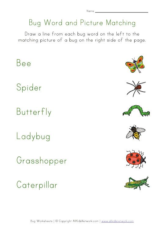 Bugs Worksheet Matching Homework Pinterest