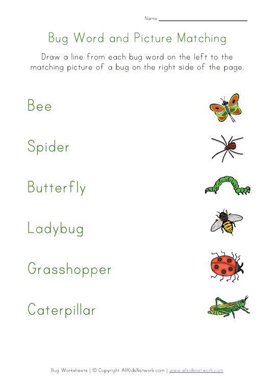 bugs worksheet matching | homework | Worksheets for kids ...