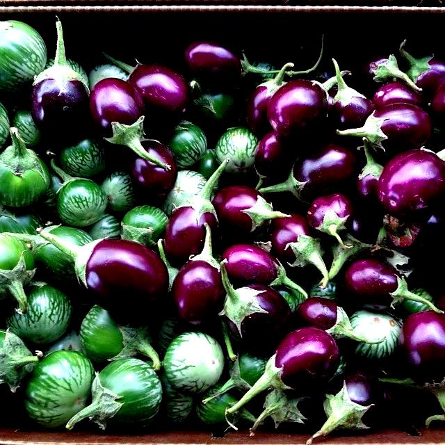 Eggplant  Photography by Sylvie Shirazi Food Photographer via Instagram