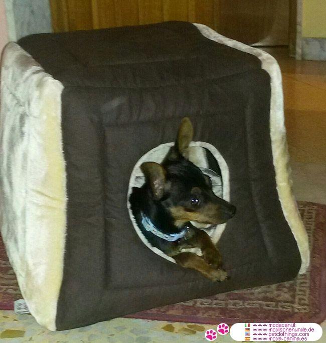 Cuccia Per Cani A Forma Di Cubo Marrone E Beige #ModaCani #Pinscher   Nuova