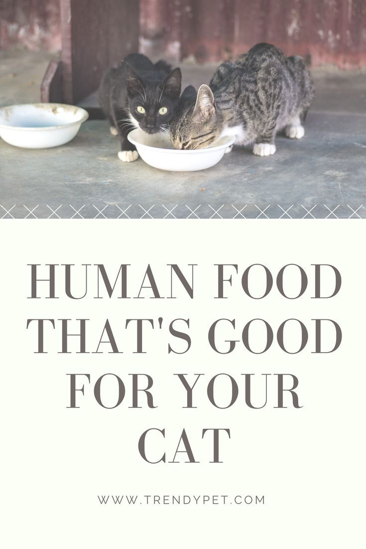 5 human foods that are good for your cat healthy cat