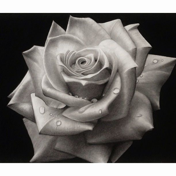 Black and white rose art drawing sketch pencil