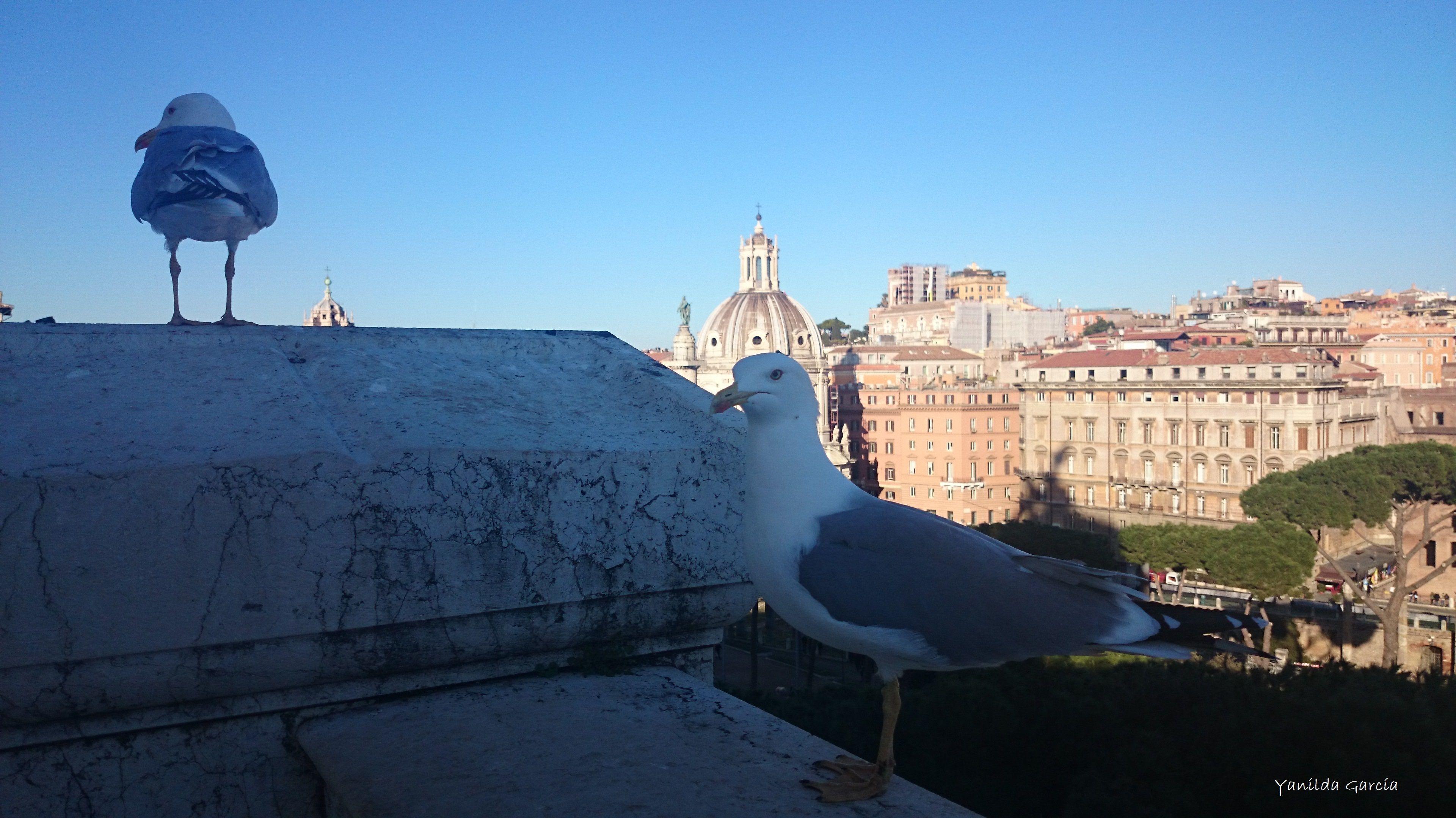 Aves, Roma