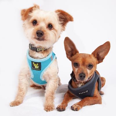 Ben 7504 & Jerry 7505 (With images) Pet adoption, Senior