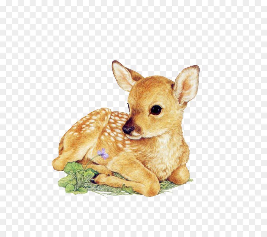 Red Deer Drawing White Tailed Deer Infant Deer Png Is About Is About Fawn Wildlife Chihuahua Carnivoran Stuff Deer Drawing Cute Drawings Baby Deer Tattoo