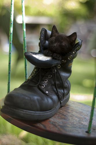 i wish my black kitty could fit in my boots ..no dice though
