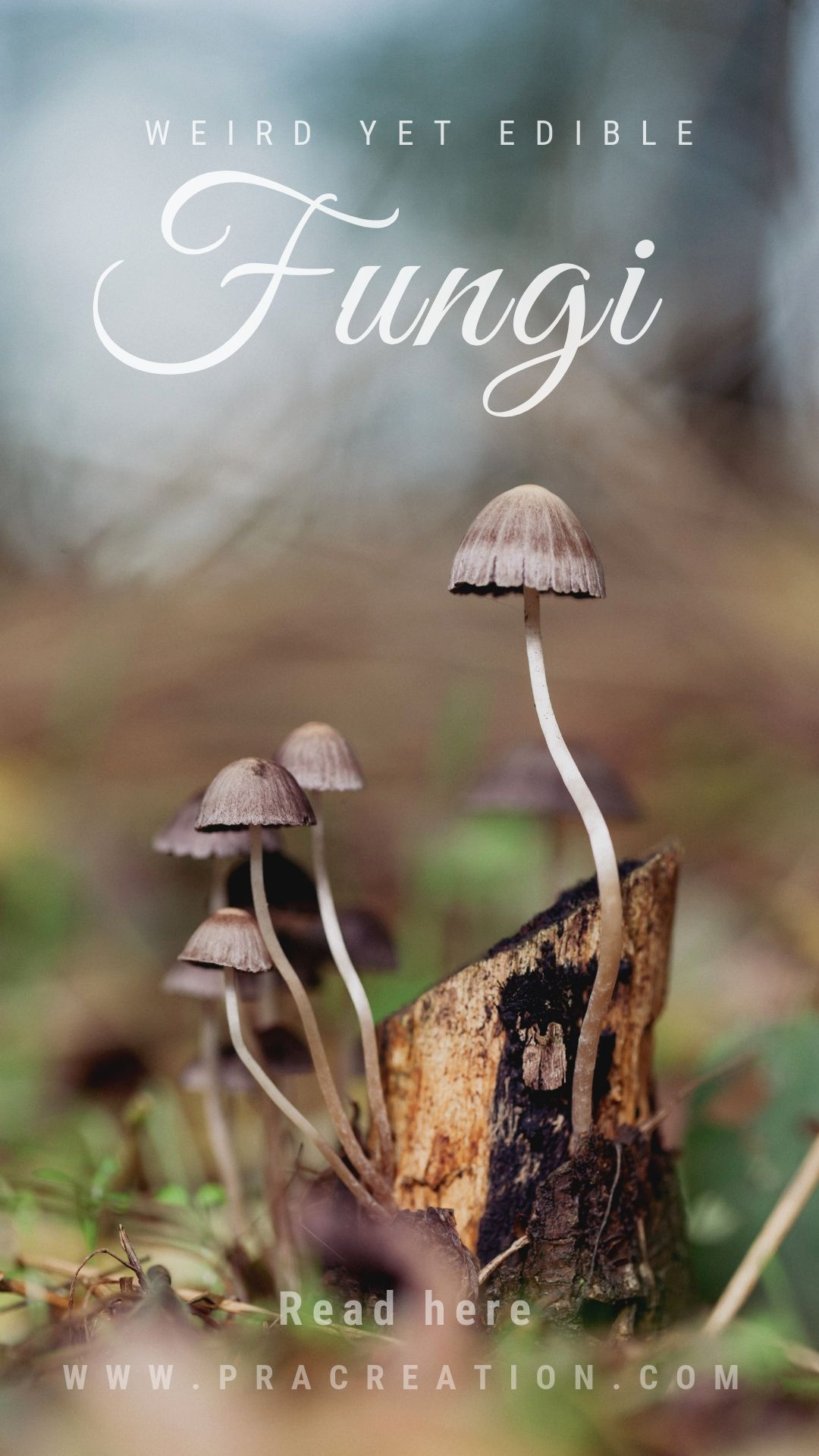 Weird Edible Mushrooms 11