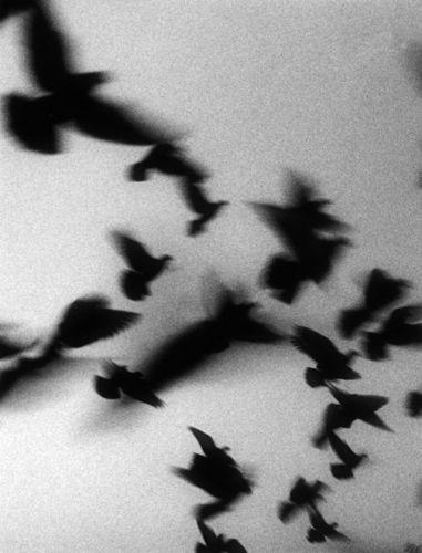 Shinya Ichikawa - Flying  birds