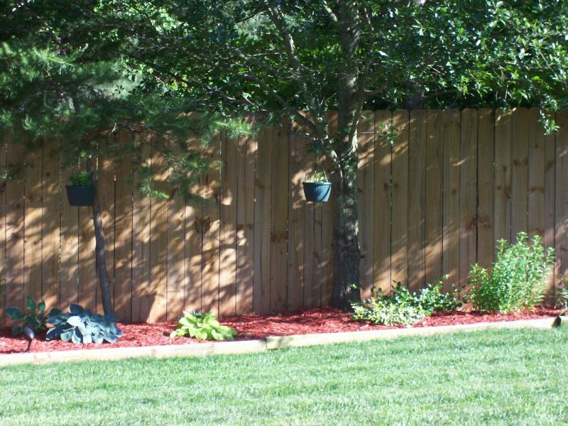 This Would Be Nice Along The Lower 40 Fence Lines Backyard Landscaping Ideas  For Dogs