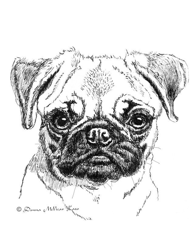 Pug Puppy Ink Drawing Embellished Miniprint 5 25 Via Etsy