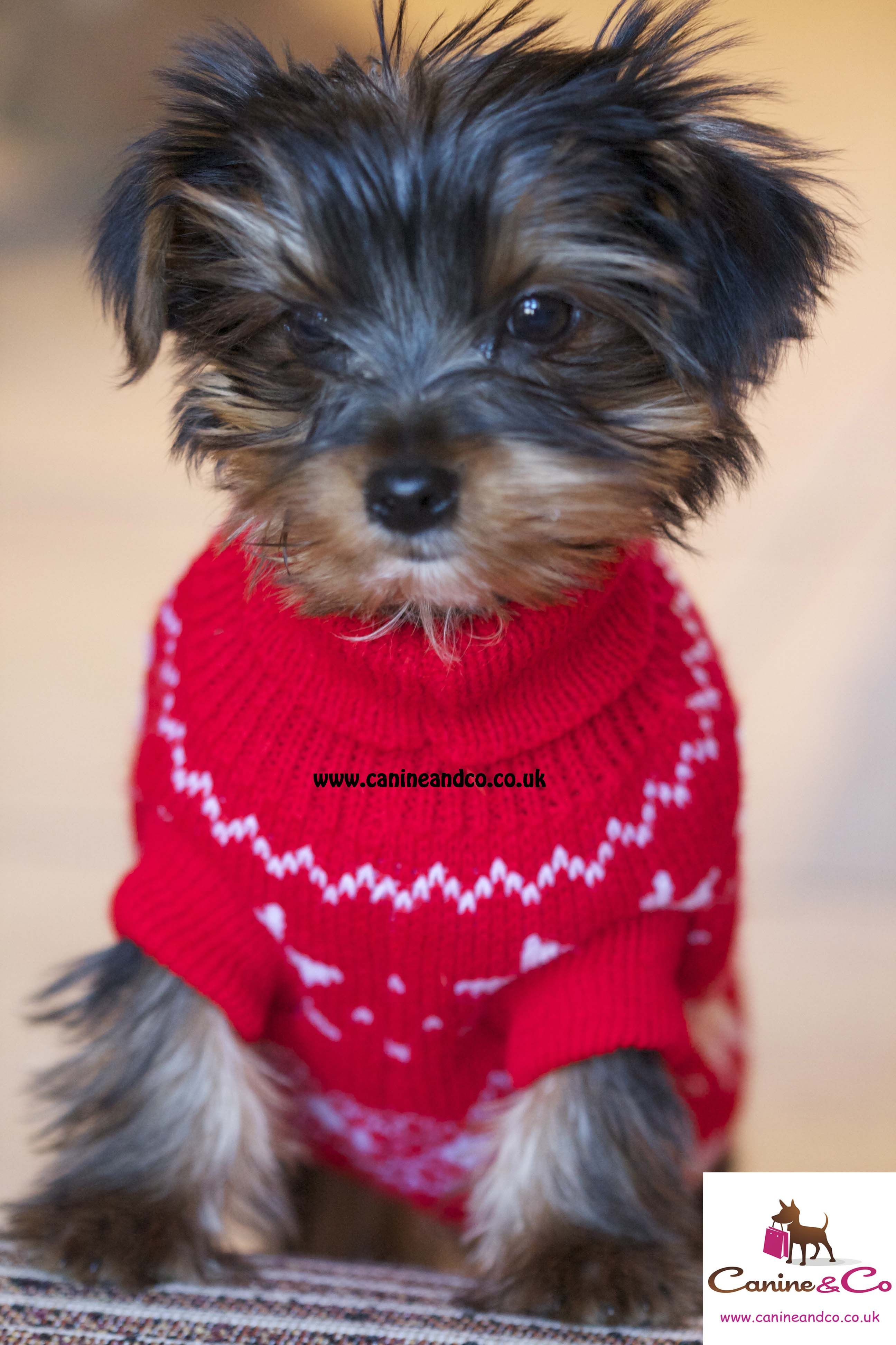 This Gorgeous Little Miniature Yorkie Is Scruffy And He S Modelling His New Jumper From Canine Co Such A A C Christmas Dog Outfits Puppy Clothes Dog Clothes