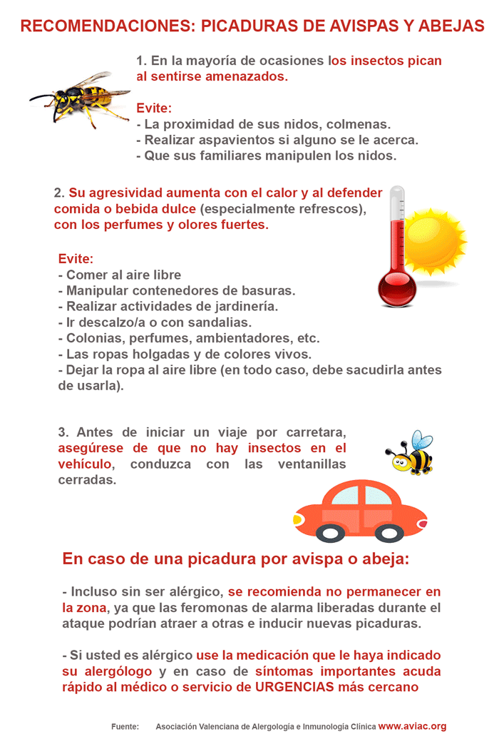 Recomendaciones para prevenir picaduras de avispas y abejas Qué ...
