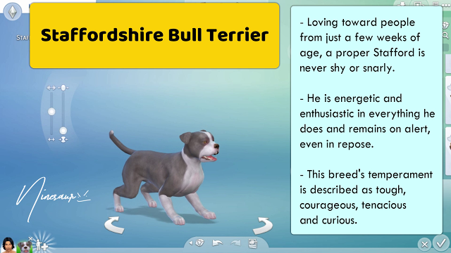 38 SMALL DOG BREEDS THE SIMS 4 NINESAUR Small dog