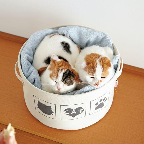 楽天市場 まるいベッド カゴ ねこ鍋 猫 猫用品 猫用 ペットグッズ Peppy ペピイ Peppy ペピイ 楽天市場店 猫 猫用品 ペット