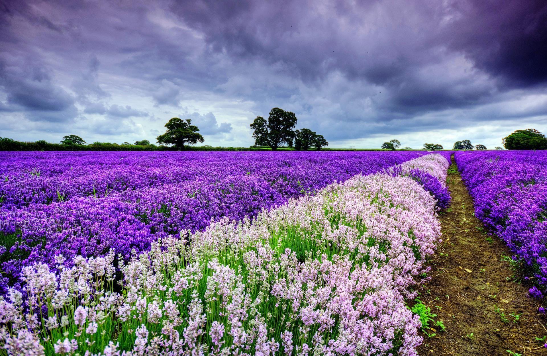 Des Fleurs Pour Le Bureau De Votre Ordinateur Fonds D Ecran Belle Nature Fleurs Violettes Et Blanches Paysages Printemps