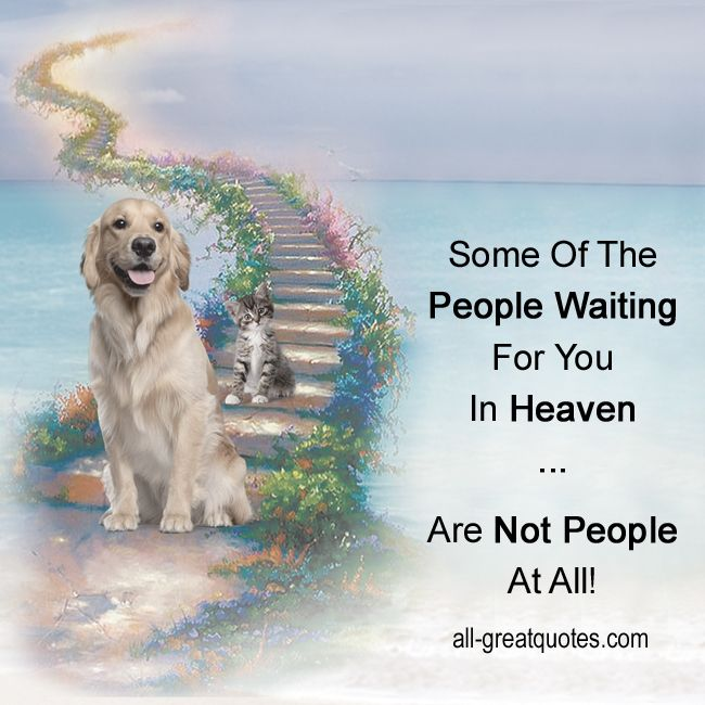 Some Of The People Waiting For You In Heaven Are Not People At All All Greatquotes Com Grief Loss Dog Poems Dogs Pets