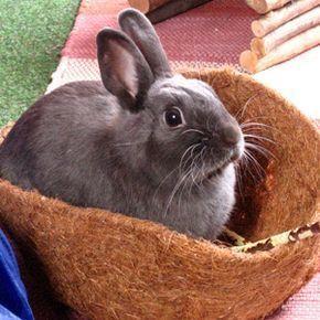 Shopping für Kaninchen bei Obi, IKEA und Co. Eine