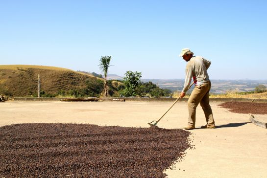 Drying natural coffee in Mococa