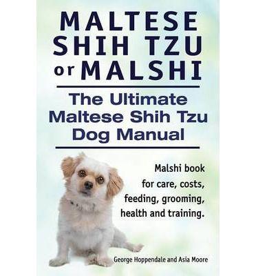 Maltese Shih Tzu Or Malshi The Ultimate Maltese Shih Tzu Dog