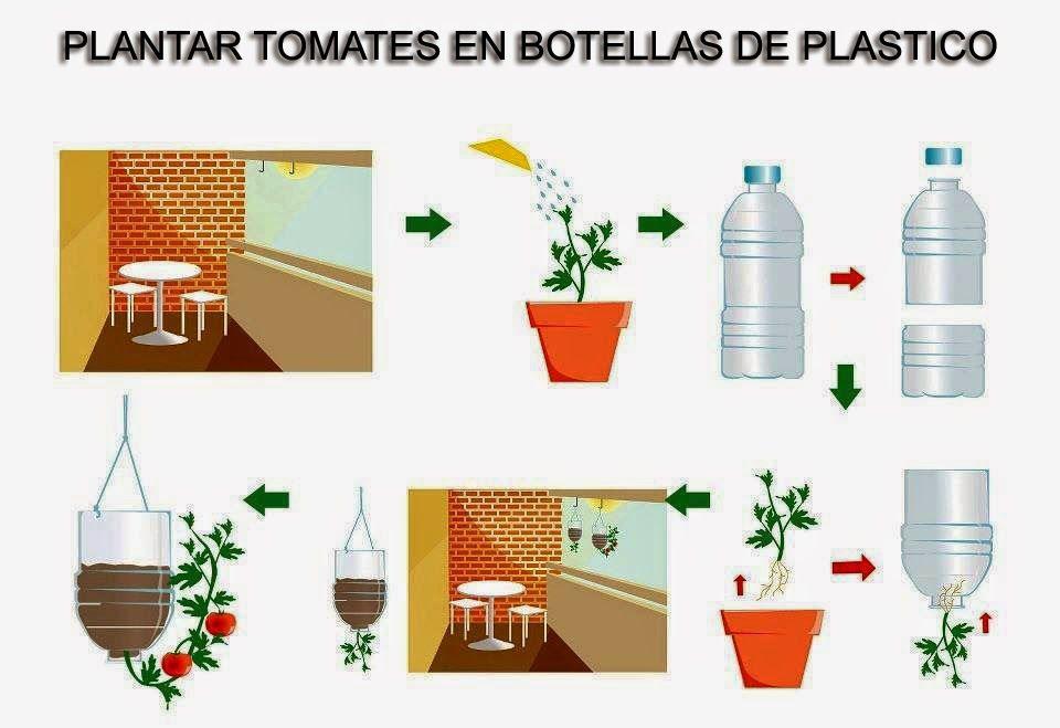انتج فى المنزل Recycle Idea In Home طريقه زراعة الطماطم في زجاجات البلاستك بطريقه معلق Growing Tomatoes Growing Organic Tomatoes Growing Tomato Plants
