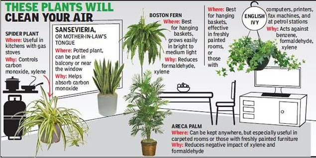 Green shoots: The best air purifiers cost the least - Times of India. Green  Plants ...