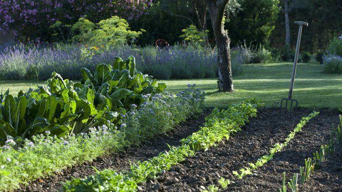 les erreurs viter dans l organisation du potager m6 pinterest permaculture gardens and. Black Bedroom Furniture Sets. Home Design Ideas