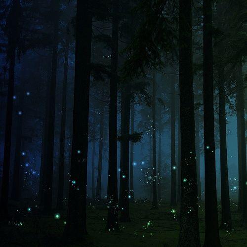 Fireflies-night-sky