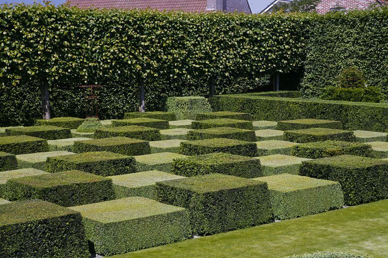 images about Hedges & Topiary on Pinterest | Gardens ...1000+ images about Hedges & Topiary on Pinterest | Gardens ...