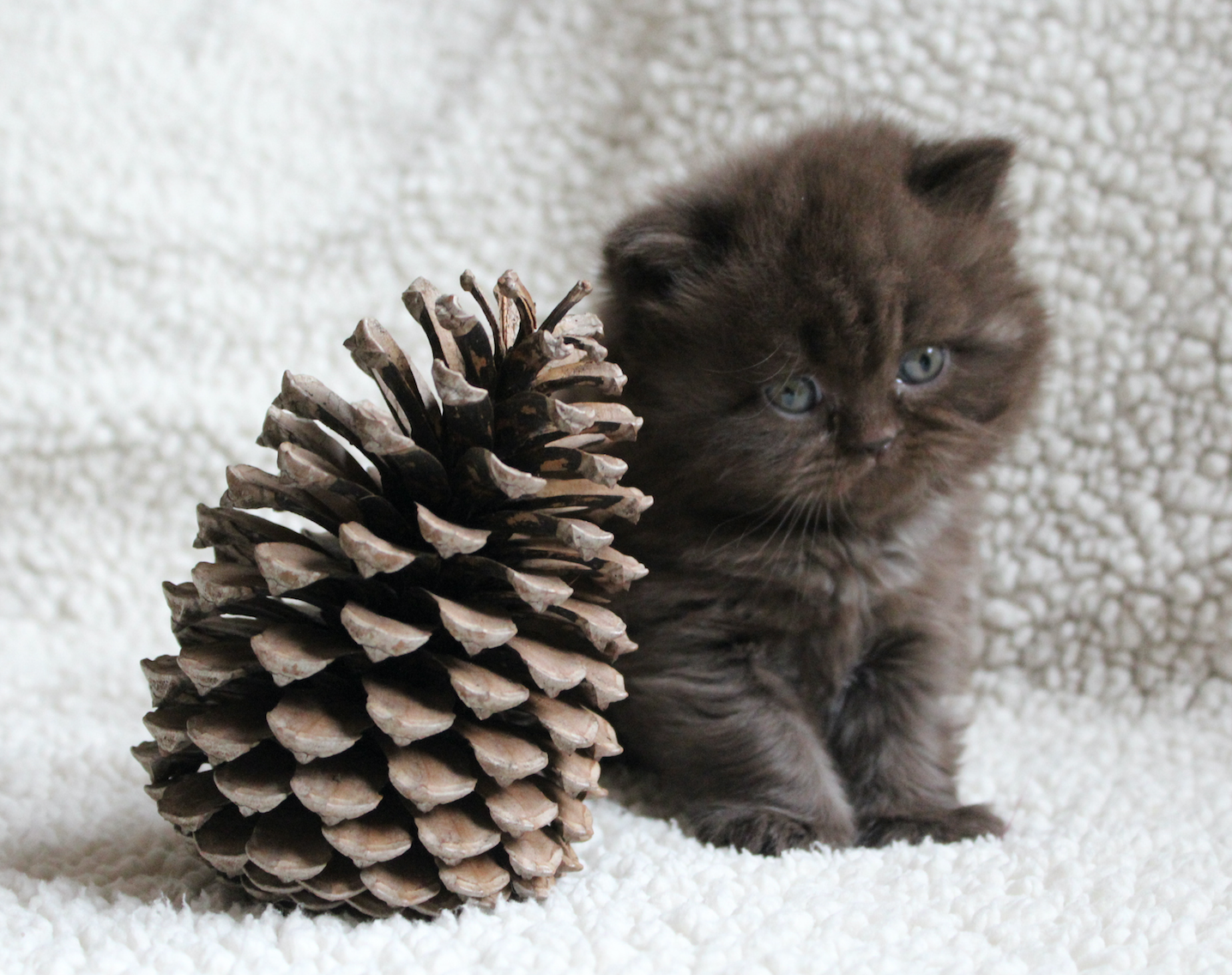 8 SantaApproved Tricks for Keeping Your Cat Off Your