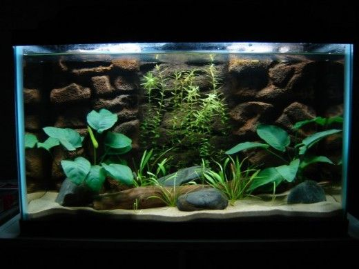 Don T Get Let Down Over The Myths Of Sand Being A Time Consuming Aquarium Substrate Learn How To Clean Quickly And Painlessly